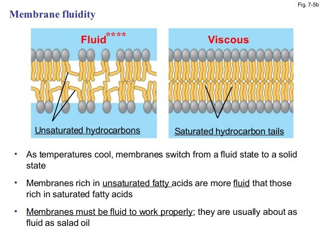 cell membranes and temperature Cell membranes (a) outline the roles of membranes within cells and at the surface of cells (b) state that plasma (cell surface) membranes are partially permeable barriers plasma membranes are partially permeable meaning they let.