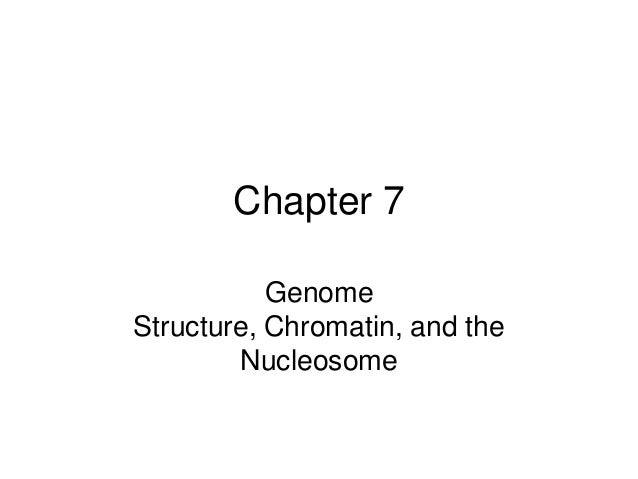 Chapter 7 Genome Structure, Chromatin, and the Nucleosome