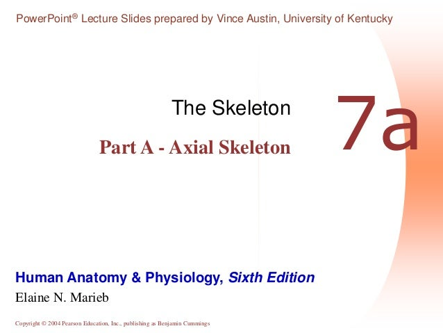 The Skeleton The Axial Skeleton | Male Models Picture