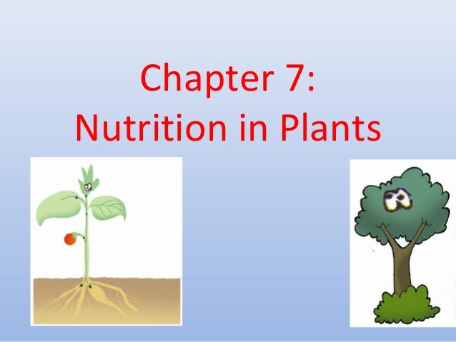 Chapter 7: Nutrition in Plants