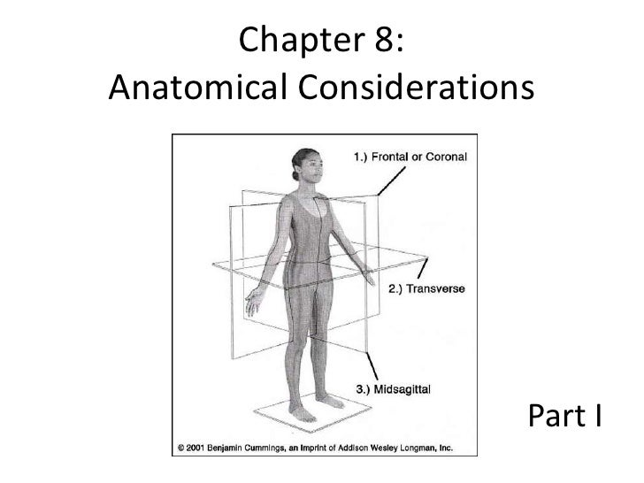 Chapter 8:Anatomical Considerations                        Part I