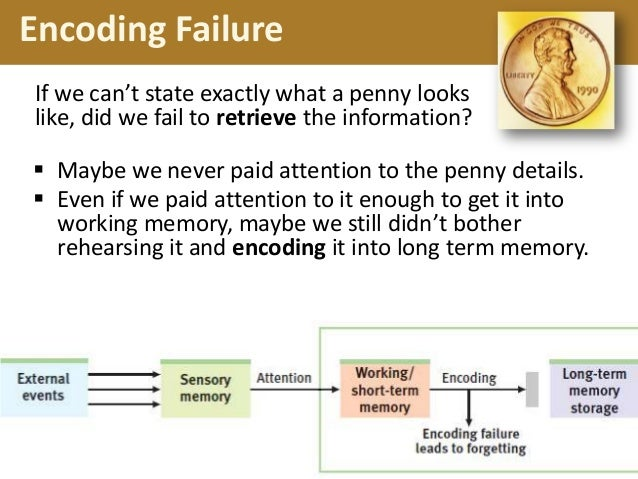 memory and encoding But if deep encoding is a stronger influence than emotional arousal, then memory should be strong in all conditions, regardless of emotion or encoding instruction we favor the latter prediction, given ritchey et al (2011) findings where overall memory was strong and enhancing effects of emotion were reduced under deep encoding conditions.
