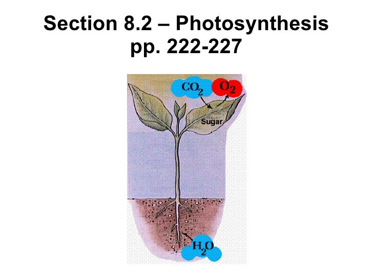 Section 8.2 – Photosynthesis pp. 222-227