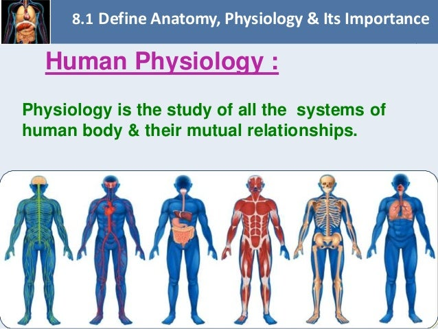 Chapter 8 Fundamentals Of Anatomy And Physiology on human circulatory system organs