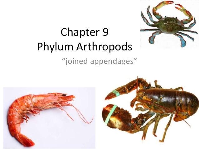 Chapter 9 arthropods