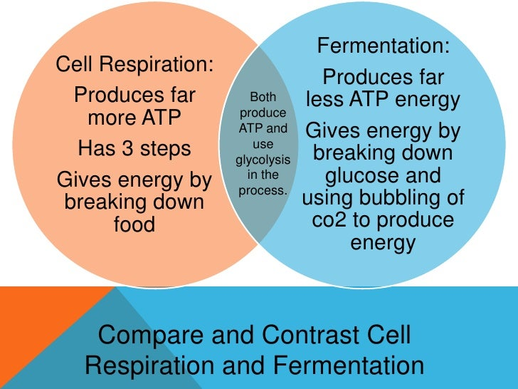 photosynthesis and respiration essay Photosynthesis is the procedure in which green plants use sunlight, carbon dioxide and water to make food and oxygen and cellular respiration is the process where cells use this food to release stored energy.