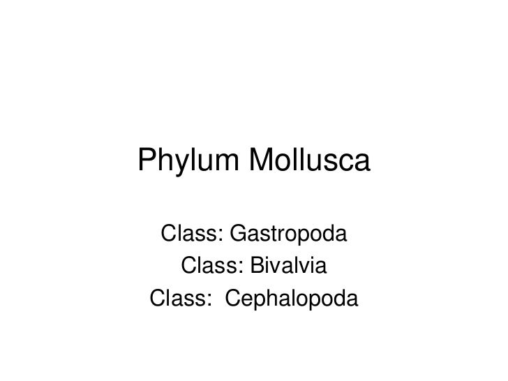 Phylum Mollusca Class: Gastropoda   Class: BivalviaClass: Cephalopoda