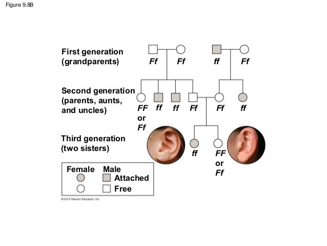 Attached earlobes dating