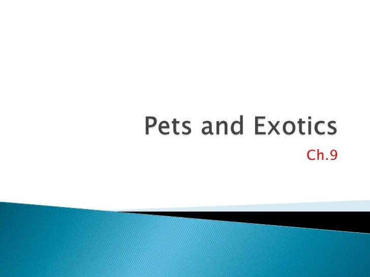 Pets and Exotics