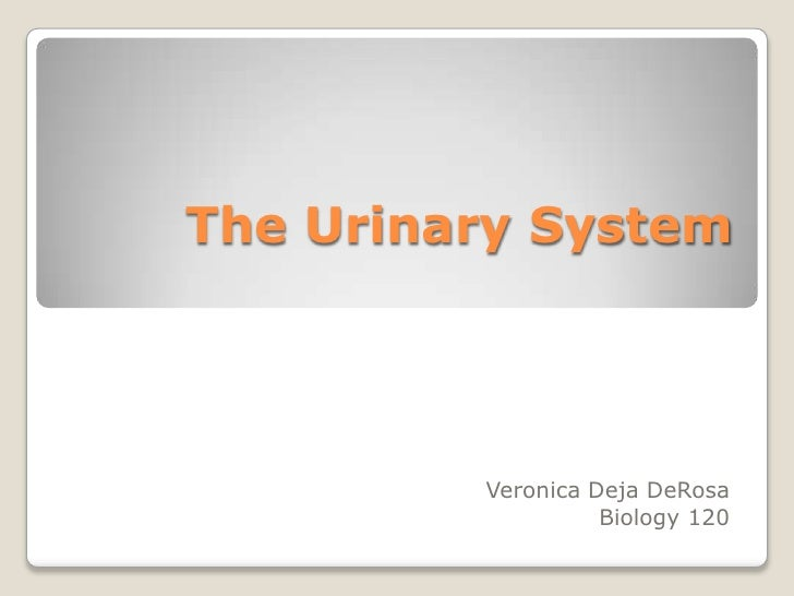 The Urinary System<br />Veronica DejaDeRosa<br />Biology 120<br />