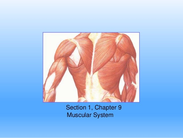 Section 1, Chapter 9 Muscular System