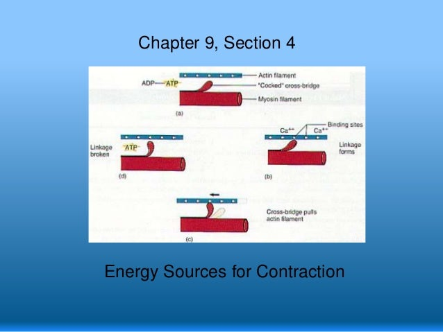 Chapter 9, Section 4  Energy Sources for Contraction