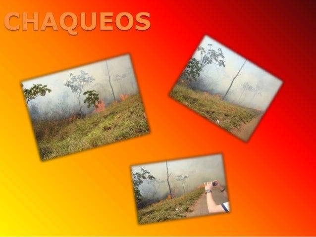 CHAQUEOS