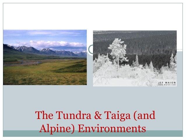 The Tundra & Taiga (and Alpine) Environments