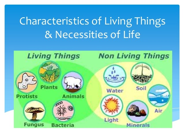 Characteristics of Living Things & Necessities of Life