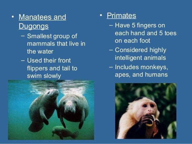 Characteristics of Monotremes Mammals Monotremes Mammals That Lay