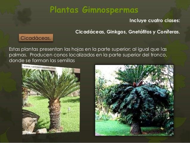 Plantas Vasculares con Semilla