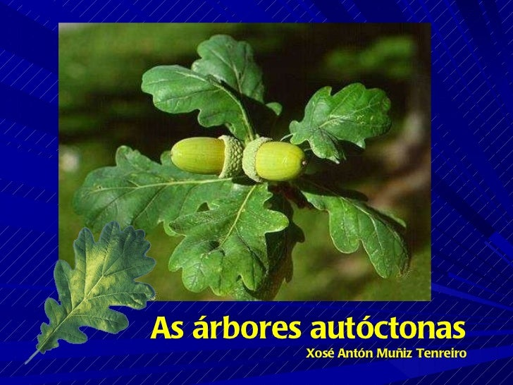 As árbores autóctonas Xosé Antón Muñiz Tenreiro