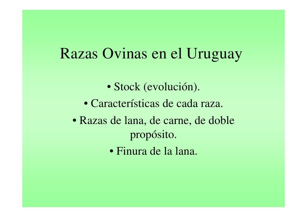 Ovinos en Uruguay