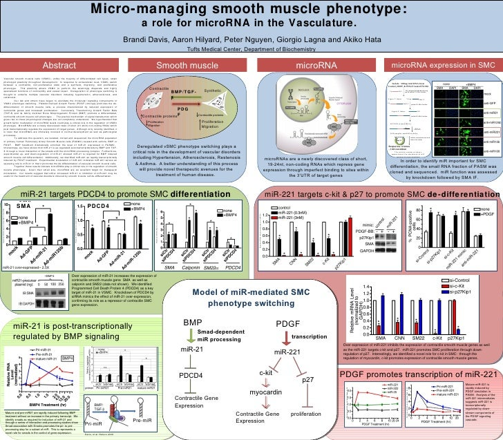 Micro-managing smooth muscle phenotype:  a role for microRNA in the Vasculature.  Brandi Davis, Aaron Hilyard, Peter Nguye...