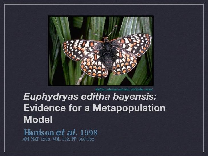 Euphydryas editha bayensis:  Evidence for a Metapopulation Model <ul><li>Harrison  et al . 1998 </li></ul>http://www.calac...
