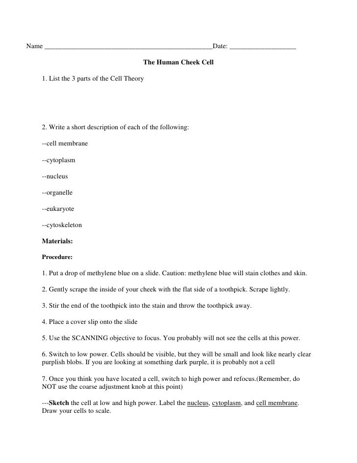 Metric Conversion Worksheet further Prokaryotic And Eukaryotic Cells ...