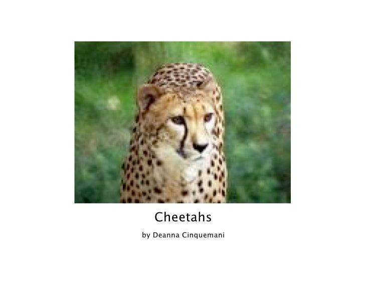 Cheetahs by Deanna Cinquemani