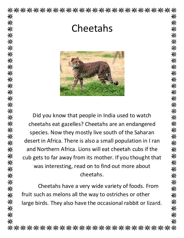 Cheetahs Did you know that people in India used to watch cheetahs eat gazelles? Cheetahs are an endangered species. Now th...