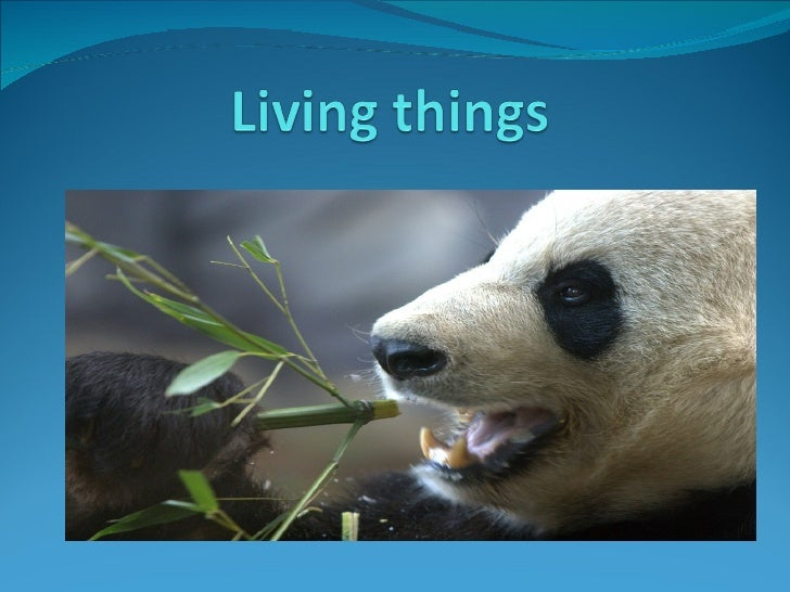 Living things-All living things need air,food and water to stay alive.-Living things respond to changes around them.-Livin...