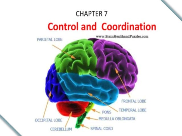 """• """" It is the type of coordination present between the cells or different organs within the body of multicellular organism..."""