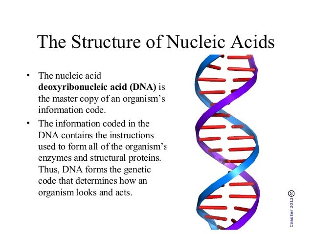 an introduction to venters construction of nucleotides Introduction to basic human genetics professor hanan hamamy family history and construction of a pedigree could point to the category two chains of nucleotides arranged in a double helix the backbone of each chain is.
