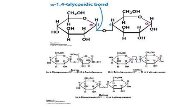 new glycogen powder