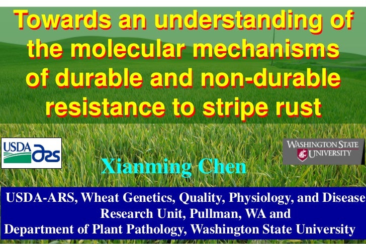 Towards an understanding of  the molecular mechanisms  of durable and non-durable    resistance to stripe rust            ...