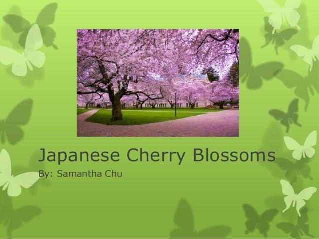 Japanese Cherry Blossoms By: Samantha Chu