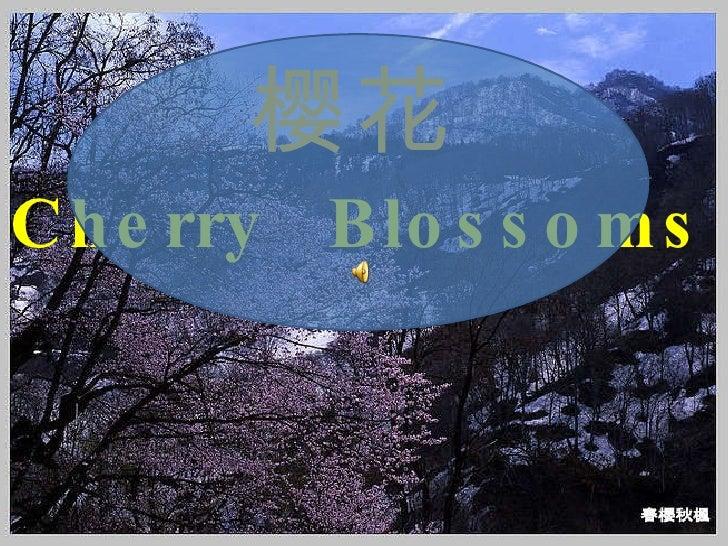 樱花 Cherry  Blossoms