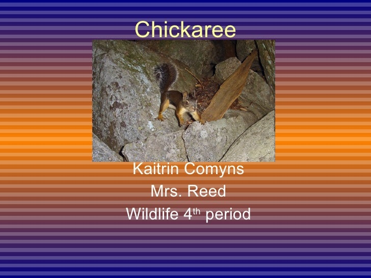 Chickaree Kaitrin Comyns Mrs. Reed Wildlife 4 th  period