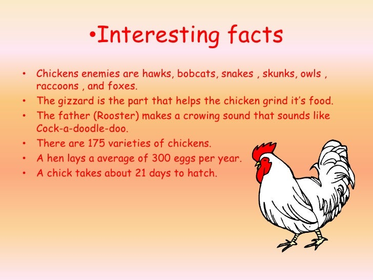 Fun Facts For Kids Cards
