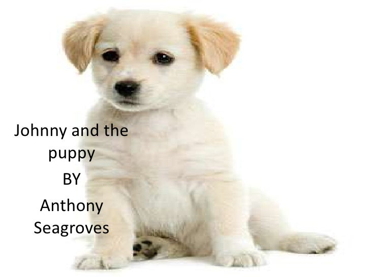 Johnny and the    puppy     BY   Anthony  Seagroves