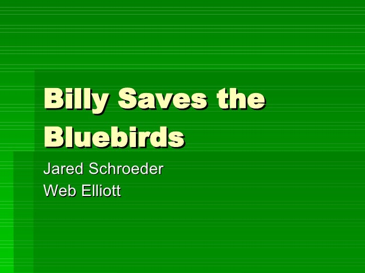 Billy Saves the Bluebirds