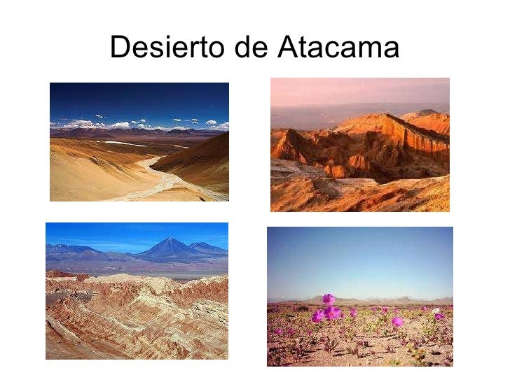 Chile zona norte for Acuarios zona norte