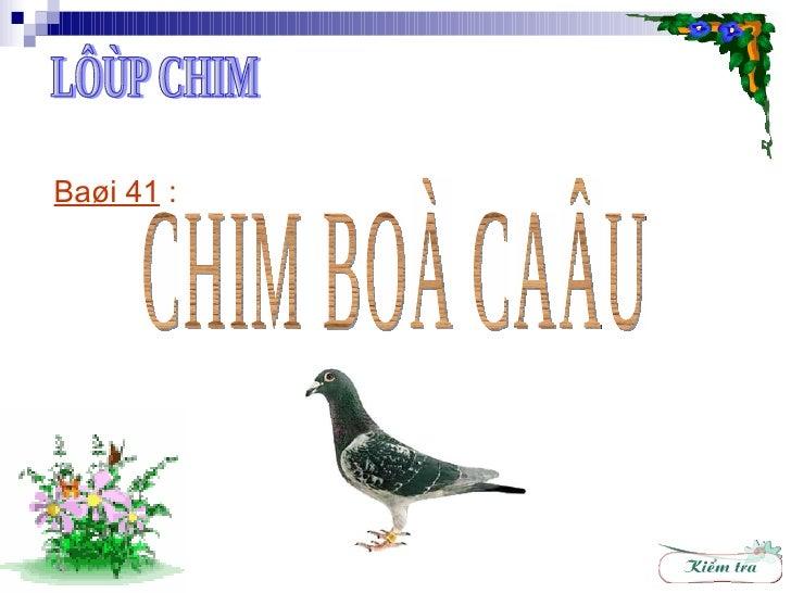 Baøi 41  :   CHIM BOÀ CAÂU LÔÙP CHIM