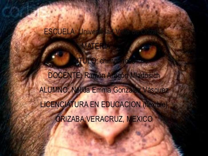 ESCUELA: Universidad Valle de Orizaba            MATERIA: Tic I         TITULO: chimpancés  DOCENTE: Ramón Aragón Mladosic...