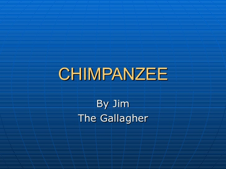CHIMPANZEE By Jim The Gallagher