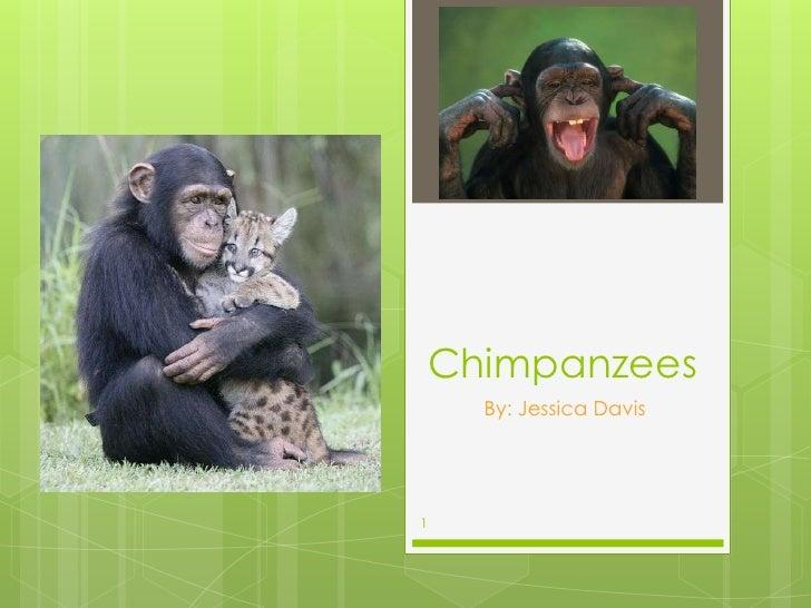 Chimpanzees      By: Jessica Davis1