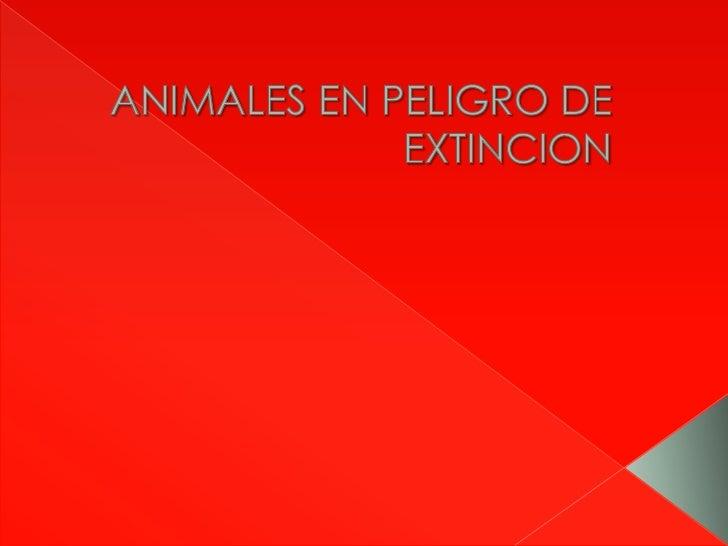    La chinchilla es un roedor silvestre de la zona de la cordillera de los    Andes, de Argentina, Bolivia, Norte de Chil...