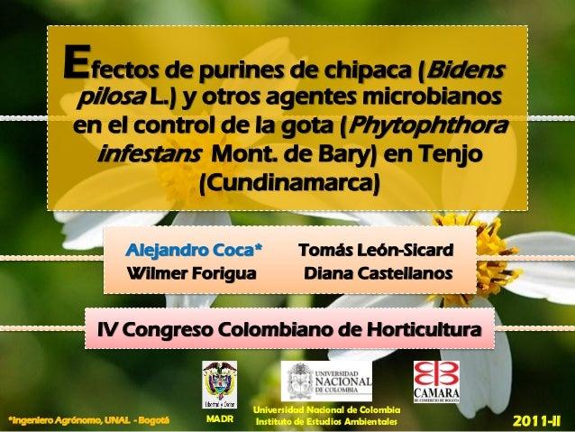 Efectos de purines de chipaca (Bidens             pilosa L.) y otros agentes microbianos             en el control de la g...