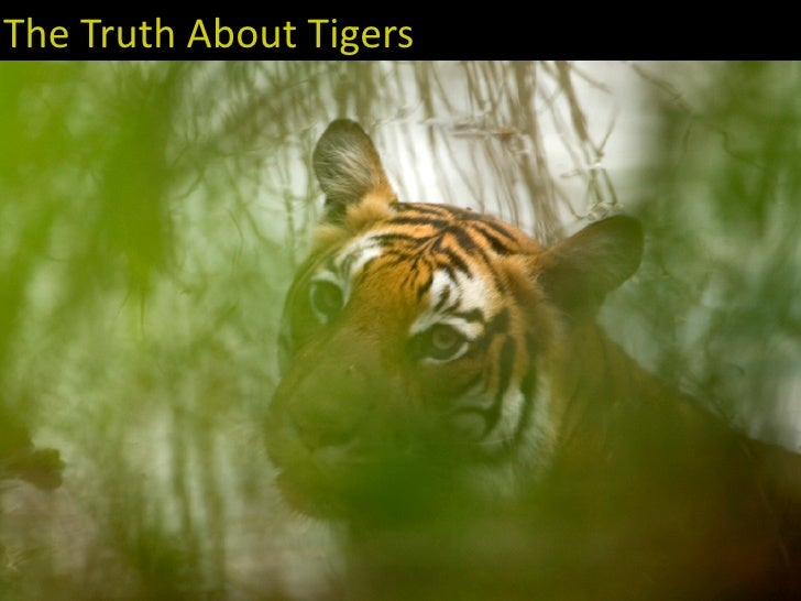 The truth about Tigers
