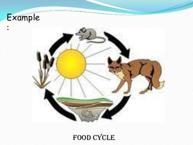 Food Cycle Definition: it is