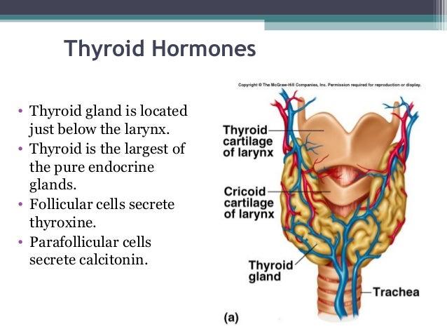 dhea to increase testosterone