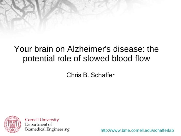 Your brain on Alzheimer's disease: the potential role of slowed blood flow <ul><li>Chris B. Schaffer </li></ul>